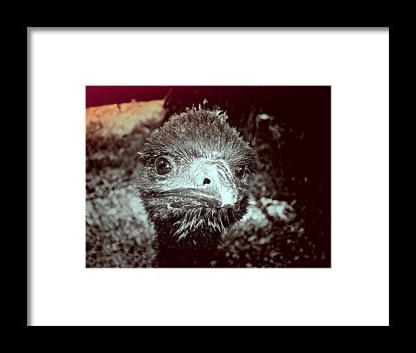 Emu Framed Print featuring the photograph Howdy Doody by Douglas Barnard