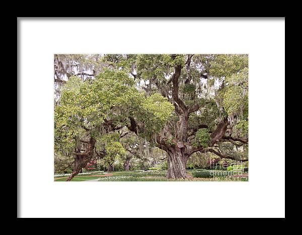 Nature Framed Print featuring the photograph Huge by Linda Langston