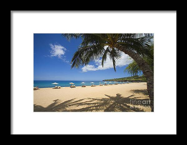 Beach Framed Print featuring the photograph Hulopoe Beach Palm Tree by Ron Dahlquist - Printscapes