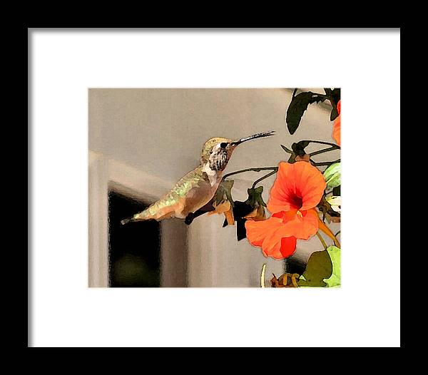 Birds Framed Print featuring the photograph Hummer And Nastursians by Ellen Lerner ODonnell