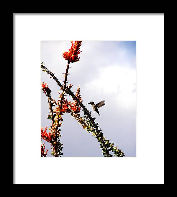 Hummingbird Framed Print featuring the photograph Hummer Likes Red by Jeanette Oberholtzer