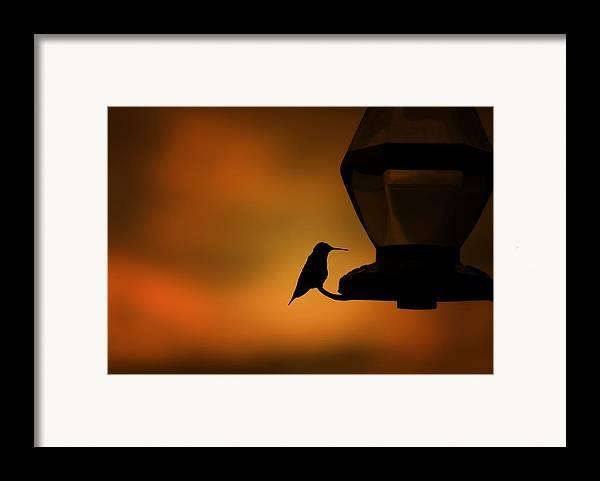 Hummingbird Framed Print featuring the photograph Hummingbird After The Storm by Al Mueller