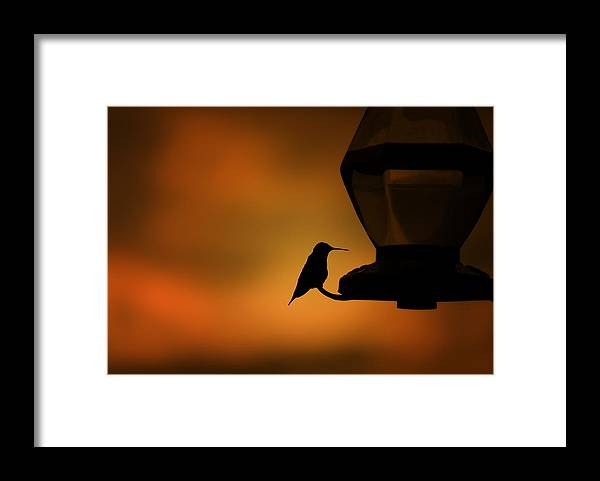 Hummingbird Framed Print featuring the photograph Hummingbird After The Storm by Al Mueller