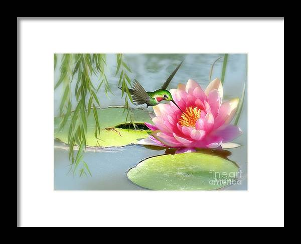 Hummingbird Framed Print featuring the mixed media Hummingbird And Water Lily by Morag Bates