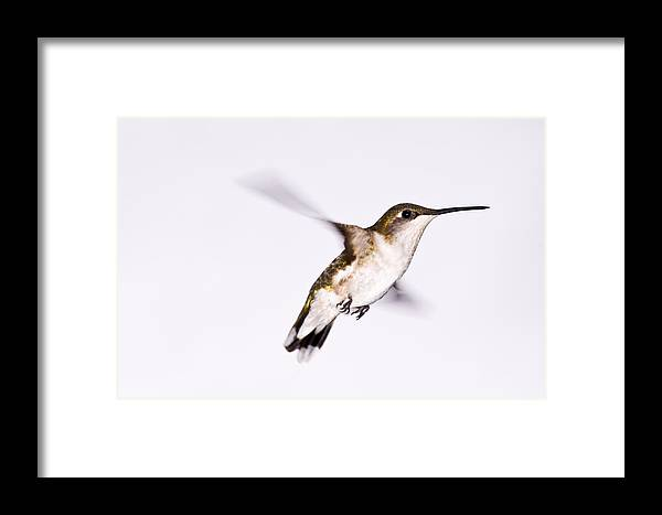 Hummingbirrd Framed Print featuring the photograph Hummingbird by Edward Myers