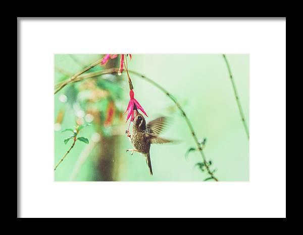 1 Framed Print featuring the photograph Hummingbird In Flight Sucking On A Juicy Pink Flower by Srdjan Kirtic