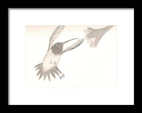 Hummingbird Framed Print featuring the drawing Hummingbird by Kristen Hurley