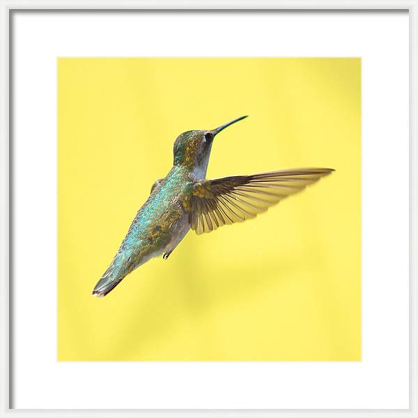 Hummingbird on Yellow 3 by Robert  Suits Jr