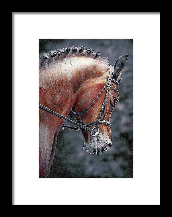Horse Framed Print featuring the drawing Hunter by Paul Archer