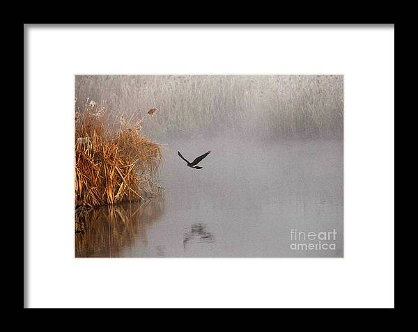 Bird Framed Print featuring the photograph Hunting In The Mist by Dennis Hammer