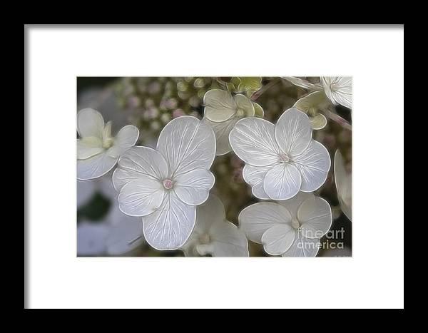 Flowers Framed Print featuring the mixed media Hydrangea Fractalius by Deborah Benoit