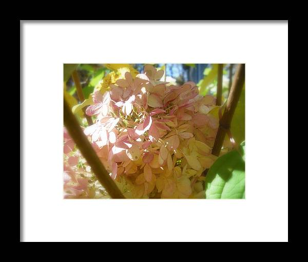 Flower Framed Print featuring the photograph Hydrangea by John Julio
