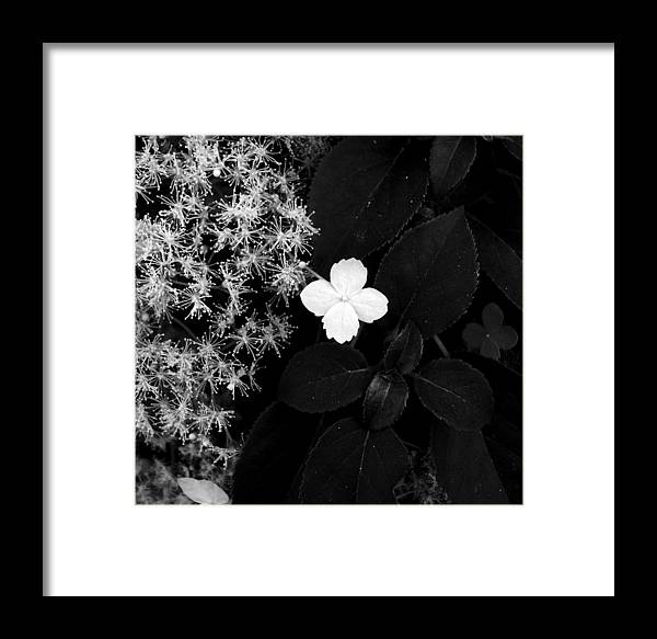 Flower Framed Print featuring the photograph Hydrangea Petiolaris by Vah Pall