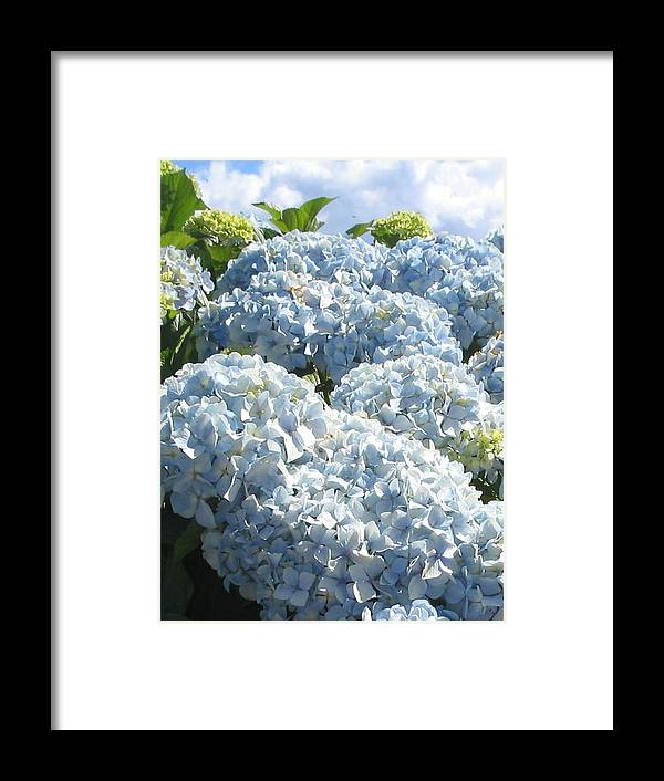 Blue Hydrangea Framed Print featuring the photograph Hydrangeas by Valerie Josi