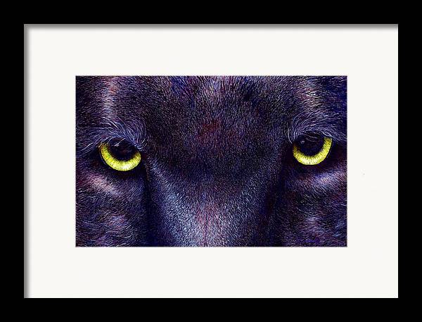 Cats Framed Print featuring the painting Hyptnotist The Black Panther by JoLyn Holladay