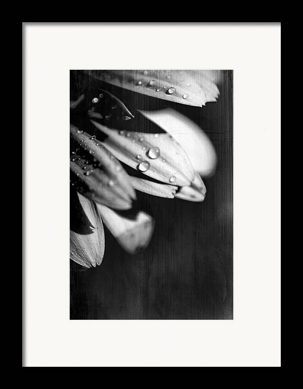 Flowers Framed Print featuring the photograph I Am Barely Breathing by Laurie Search