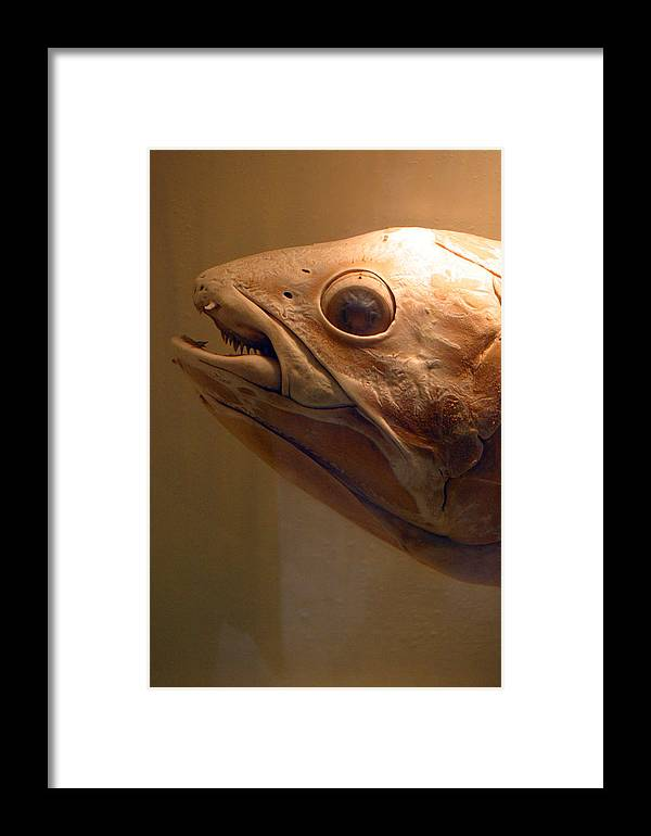 Jez C Self Framed Print featuring the photograph I Can See You Looking by Jez C Self