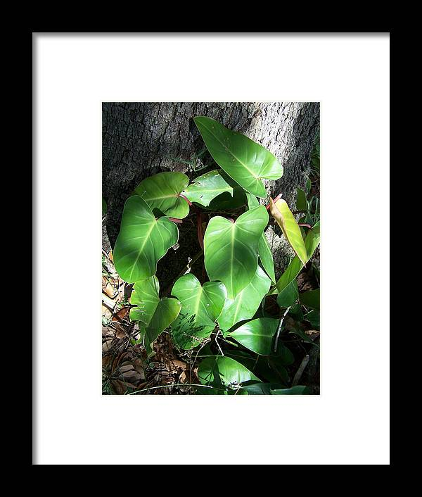 Plant Photography Framed Print featuring the photograph I Feel The Light by Evelyn Patrick