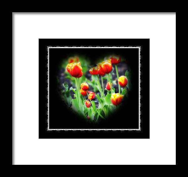 Heart Framed Print featuring the photograph I Heart Tulips - Black Background by Bill Cannon