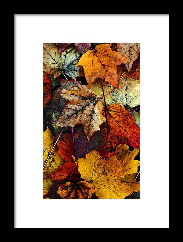 Fall Color Framed Print featuring the photograph I Love Fall 2 by Joanne Coyle