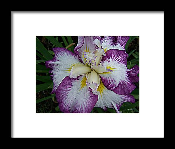 Flowers Framed Print featuring the photograph I Love Iris by Vijay Sharon Govender