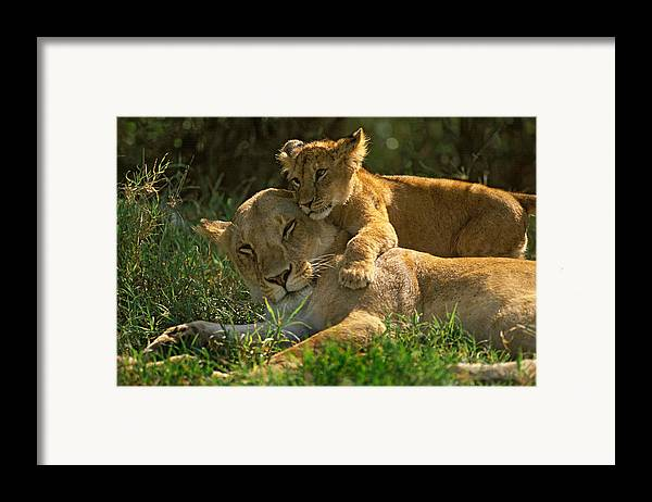 Africa Framed Print featuring the photograph I Love My Mother by Johan Elzenga