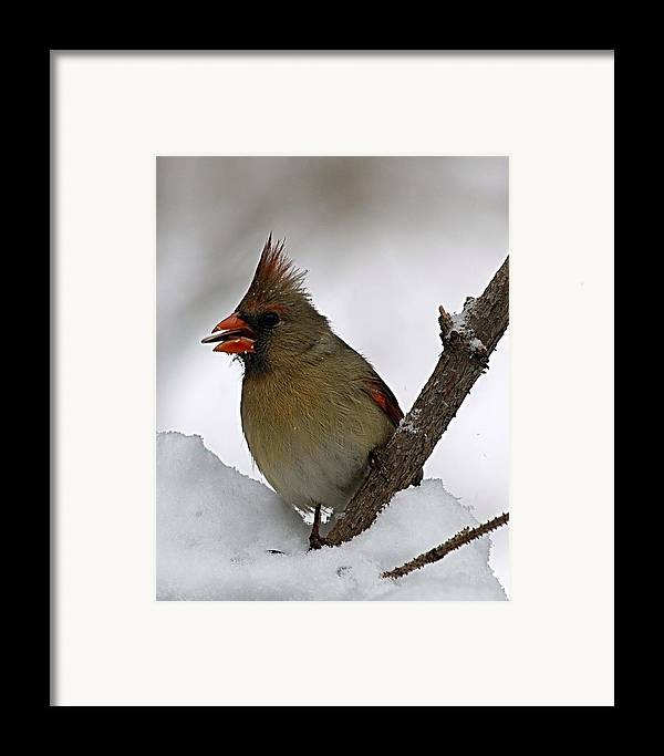 Bird Framed Print featuring the photograph I Love Seeds by Gaby Swanson