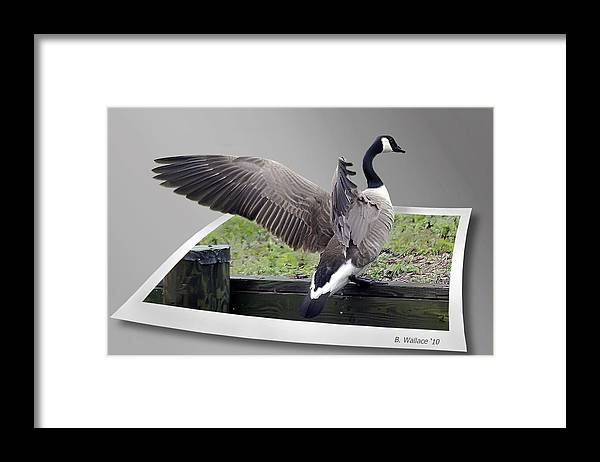 2d Framed Print featuring the photograph I Made It by Brian Wallace