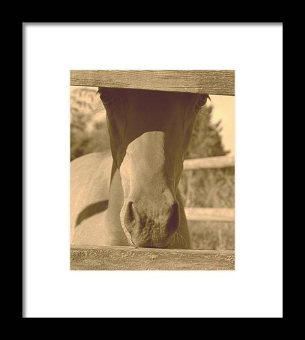 Sepia Framed Print featuring the photograph I See You by J D Banks