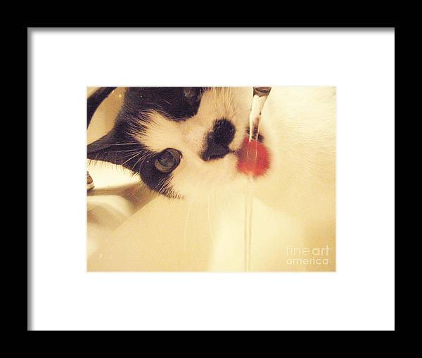 Cat Water Black White Tongue Pink Love Framed Print featuring the photograph I See You by Kristine Nora