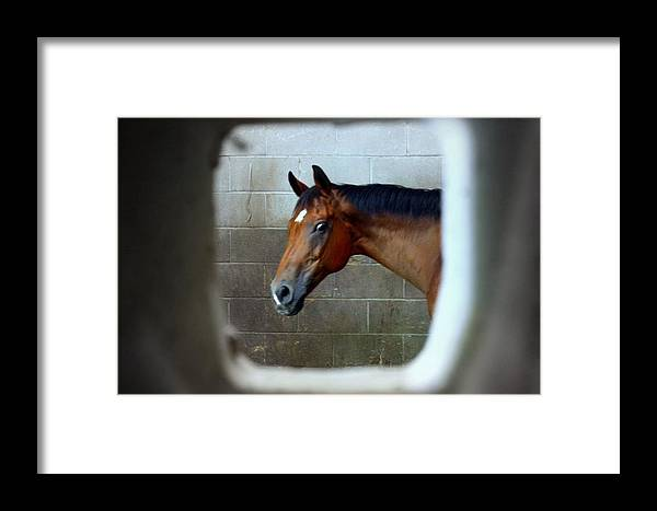 Horse Framed Print featuring the photograph I Spy by Jill Tennison
