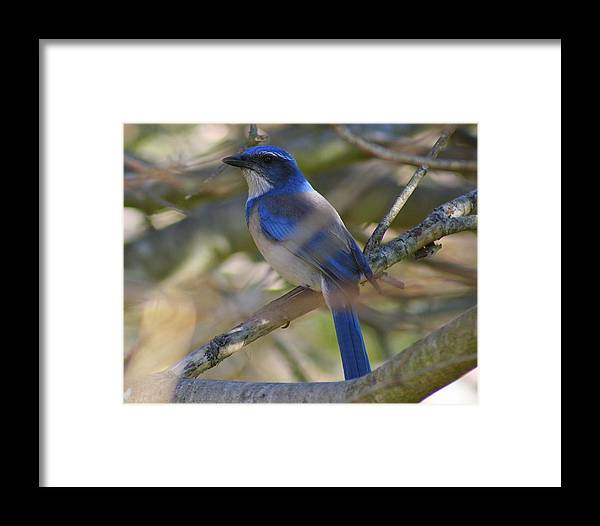 Blue Bird Framed Print featuring the photograph I Think I Found The Blue Bird Of Happiness by Kerry Reed