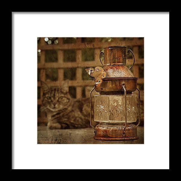 Cat Framed Print featuring the photograph I Watch You by Inesa Kayuta