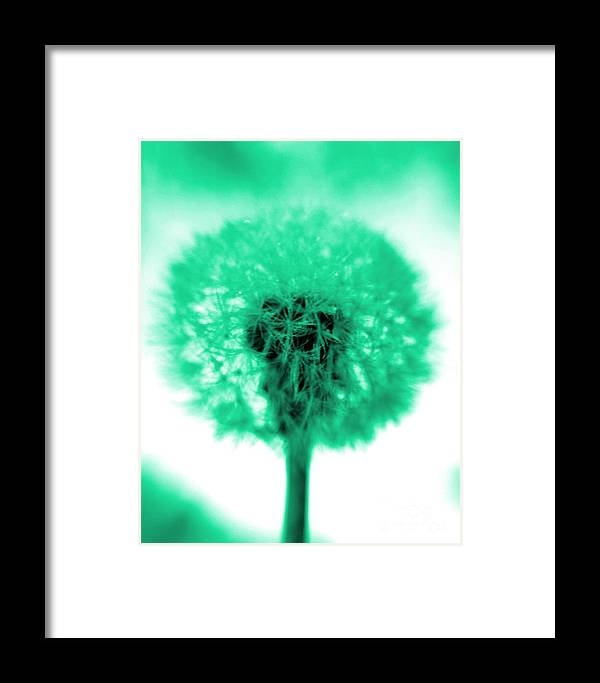 Dandelion Framed Print featuring the photograph I Wish In Aqua by Valerie Fuqua