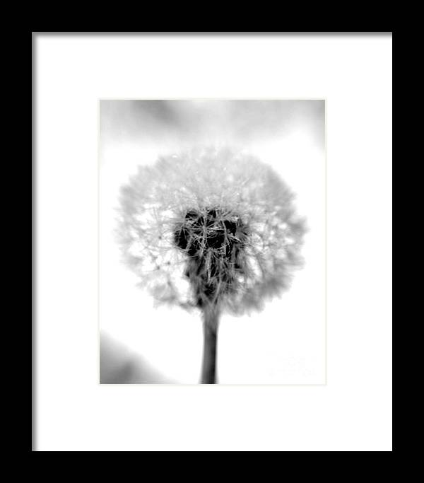 Dandelion Framed Print featuring the photograph I Wish In Black And White by Valerie Fuqua