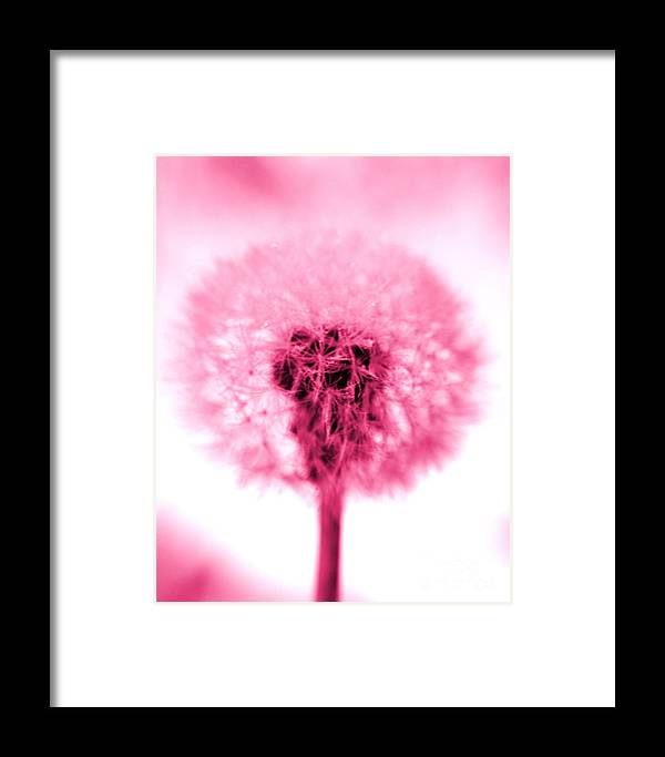 Dandelion Framed Print featuring the photograph I Wish In Pink by Valerie Fuqua