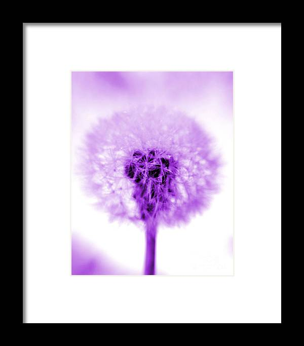 Purple Framed Print featuring the photograph I Wish In Purple by Valerie Fuqua