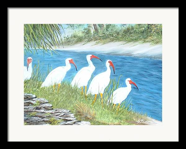 Birds Framed Print featuring the painting Ibis by Dennis Vebert