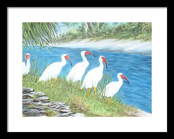 Birds Framed Print featuring the painting Ibis by Dennis Vebert