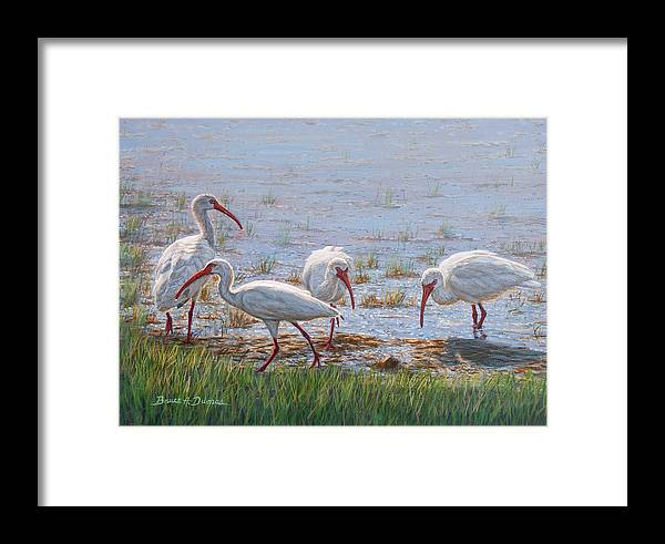 Wildlife Framed Print featuring the painting Ibis Excursion by Bruce Dumas