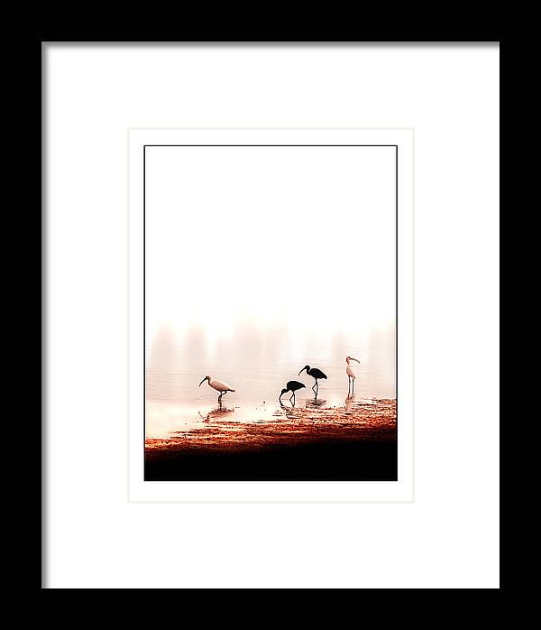 Ibis Framed Print featuring the photograph Ibis by Mal Bray