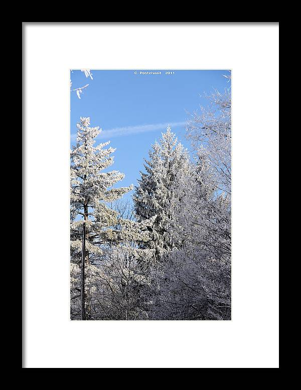 Trees Framed Print featuring the photograph Ice Covered Pine Trees by Carolyn Postelwait