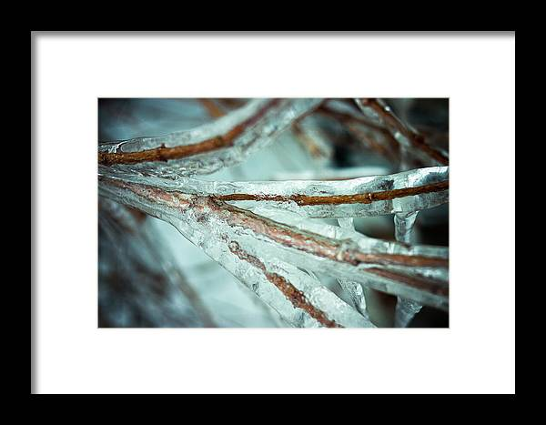 Ice Framed Print featuring the photograph Ice Ice Baby by Nikki Nisly