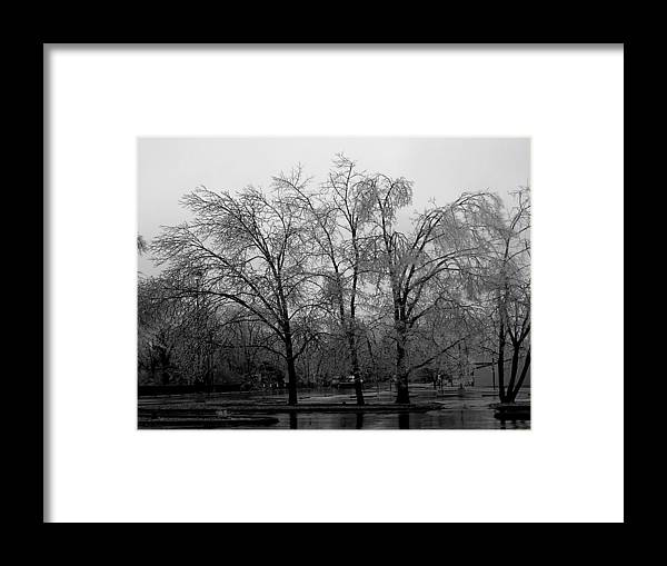 Trees Framed Print featuring the photograph Ice Trees by Audrey Venute