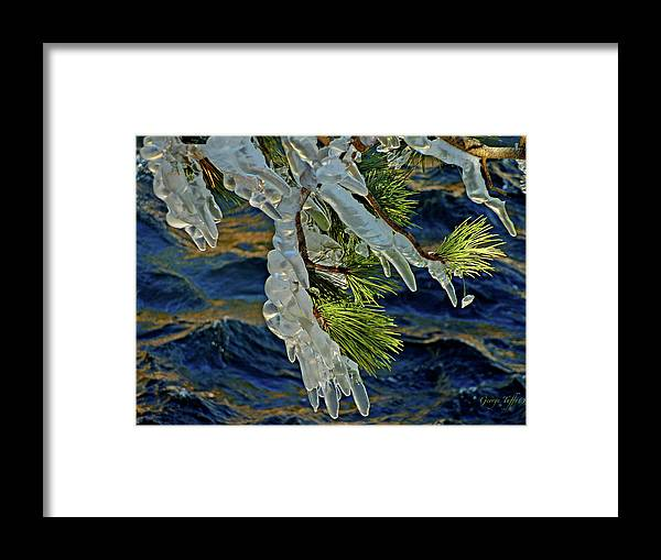 Ice Framed Print featuring the photograph Iced Pine by George Tuffy