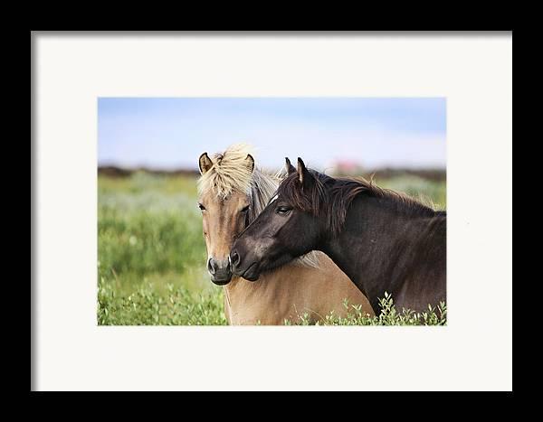 Horizontal Framed Print featuring the photograph Icelandic Horse by Gigja Einarsdottir