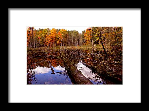 Forest Photography Framed Print featuring the photograph If A Tree Falls by Evelyn Patrick