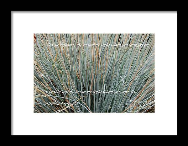 Nature Framed Print featuring the photograph If You Refuse.... by Mia Alexander
