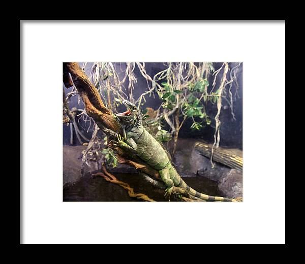 Iguana Framed Print featuring the photograph Iguana 340 by Joyce StJames