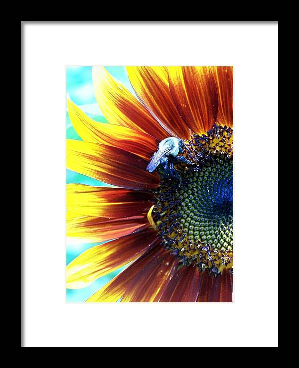 Bees Framed Print featuring the photograph I'll Bee There by Vijay Sharon Govender